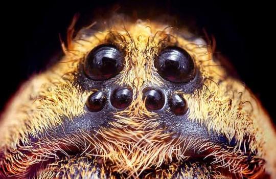 Google – den allmektige edderkoppen i nettet